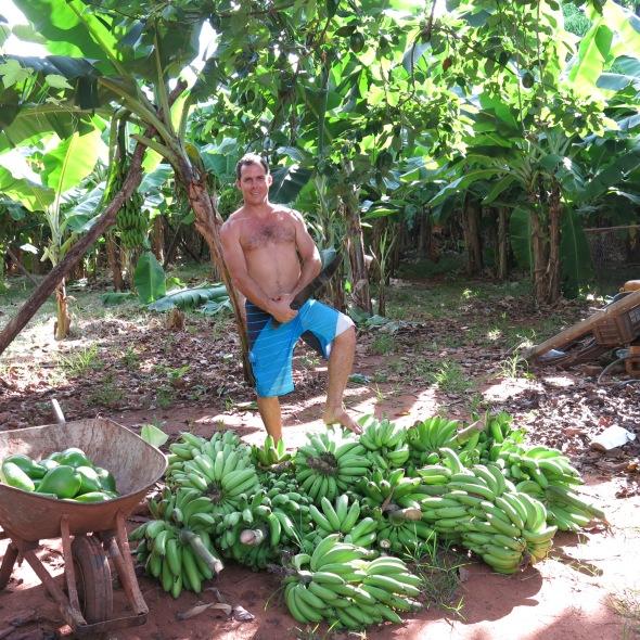 Avocados y Platano